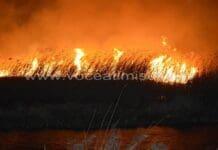 Incendiile de vegetatie
