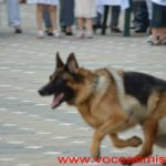 150-de-ani-de-Poliție-de-Frontieră-la-Timișoara105