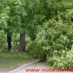 Un-copac-care-a-căzut-pe-strada-Mangalia-la-un-pas-să-OMOARE-un-copil02