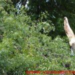Un-copac-care-a-căzut-pe-strada-Mangalia-la-un-pas-să-OMOARE-un-copil03