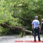Un-copac-care-a-căzut-pe-strada-Mangalia-la-un-pas-să-OMOARE-un-copil05