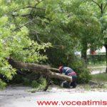 Un-copac-care-a-căzut-pe-strada-Mangalia-la-un-pas-să-OMOARE-un-copil06