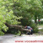 Un-copac-care-a-căzut-pe-strada-Mangalia-la-un-pas-să-OMOARE-un-copil07