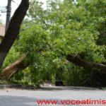 Un-copac-care-a-căzut-pe-strada-Mangalia-la-un-pas-să-OMOARE-un-copil09