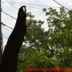 Un-copac-care-a-căzut-pe-strada-Mangalia-la-un-pas-să-OMOARE-un-copil11