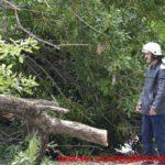 Un-copac-care-a-căzut-pe-strada-Mangalia-la-un-pas-să-OMOARE-un-copil14