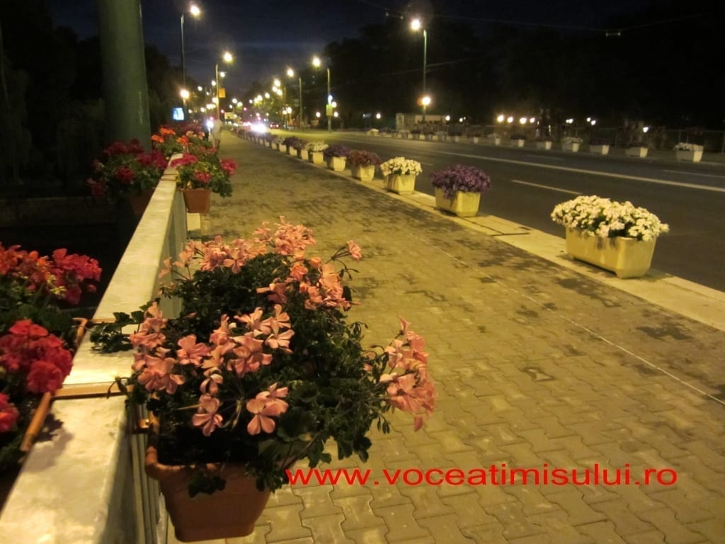 pod-michelangelo-flori-noaptea