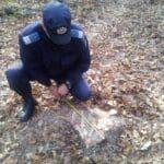 jandarm-copaci-taiati