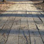 Parcul-Civic-din-centrul-Timisoarei-plin-de-crengi-rupte-2