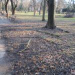 Parcul-Civic-din-centrul-Timisoarei-plin-de-crengi-rupte-3