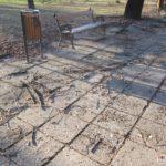 Parcul-Civic-din-centrul-Timisoarei-plin-de-crengi-rupte-8
