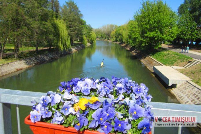 Jardiniere-flori-Bega-Podul-Michelangelo