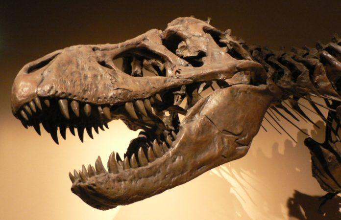 fosila-dinozaur