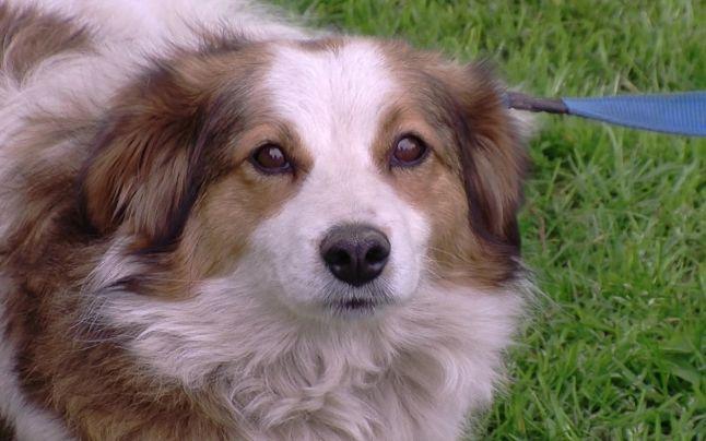 adoptie-canina