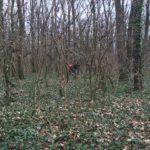 Un-bărbat-a-fost-găsit-spânzurat-de-un-copac-la-Pădurea-Verde-2