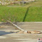 copacii-de-lângă-Parcul-Uzinei-scoși-din-rădăcini9