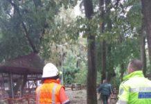 strivite de copac la Zoo