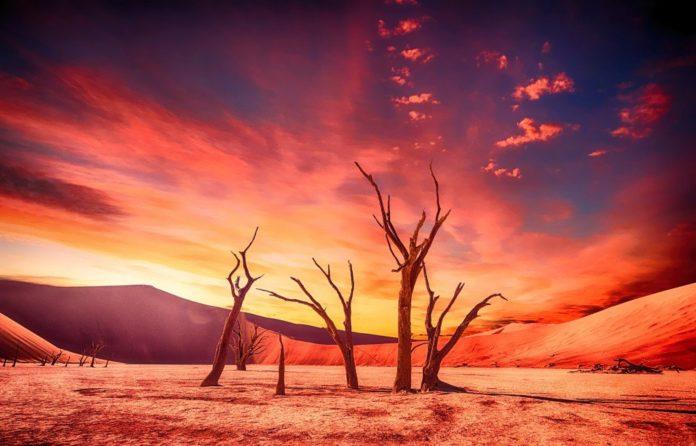 schimbari-climatice-desert-copaci-uscati