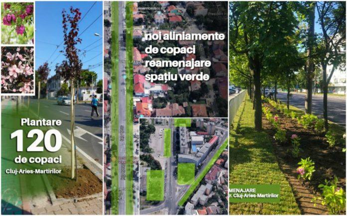 """Copaci-gazon-si-multe-flori-noul-""""spatiu-verde""""-pe-strazile-Cluj-Arieș-și-Calea-Martirilor"""